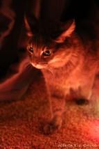 Model Marcel, the cat